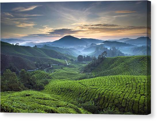 Morning At Cameron Highlands Canvas Print