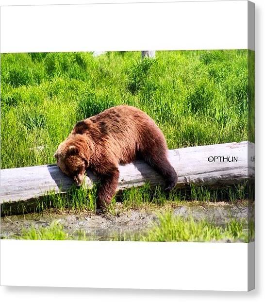 Bears Canvas Print - @nature_photossss by Patrick Thun