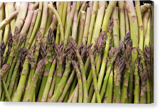 Asparagus Canvas Print - New Zealand, South Island, Marlborough by Lee Foster