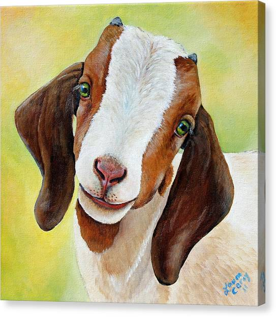 Goat Canvas Print - Opal by Laura Carey