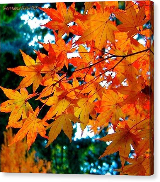 Snowboarding Canvas Print - Orange Maple Leaves by Anna Porter