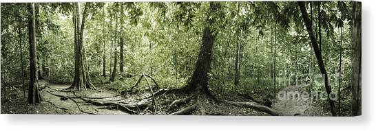 Foggy Forests Canvas Print - Panorama Of Rainforest by Atiketta Sangasaeng