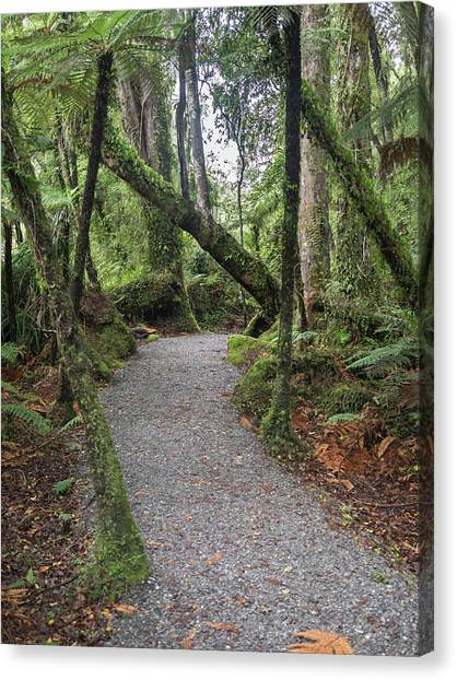 Fallen Leaf Canvas Print - Path Passing Through Forest, Te by Panoramic Images