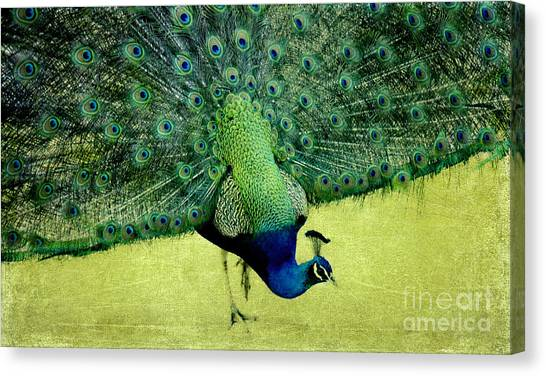 Peacock Plume Canvas Print