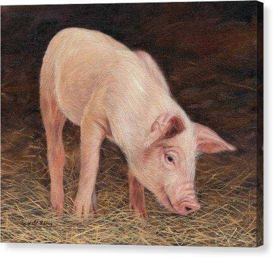Pig Farms Canvas Print - Pig by David Stribbling