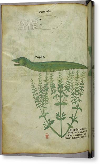 Squids Canvas Print - Plant by British Library