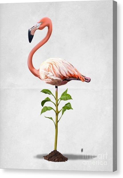Flamingos Canvas Print - Planted Wordless by Rob Snow