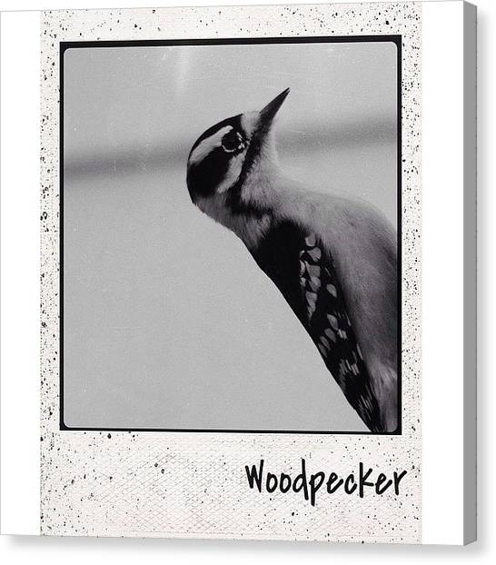 Woodpeckers Canvas Print - #polamatic #polaroid #polaroids by Robb Needham