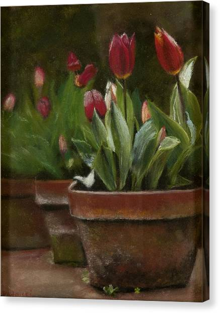 Potted Tulips Canvas Print