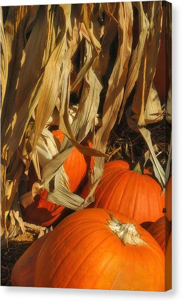 Pumpkin Harvest Canvas Print by Joann Vitali