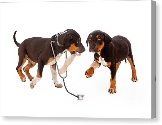 Small Mammals Canvas Print - Puppy Veterinarian And Patient by Susan Schmitz