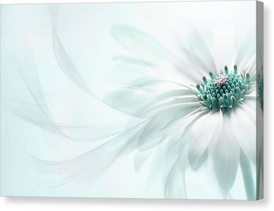 Bloom Canvas Print - Purity by Jacky Parker