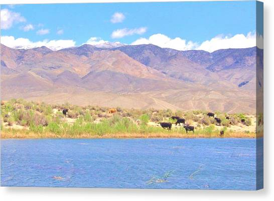 Range Cattle Canvas Print by Marilyn Diaz