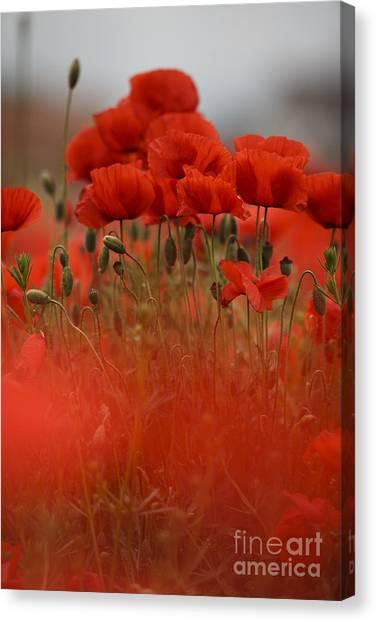 Crowd Canvas Print - Red by Nailia Schwarz