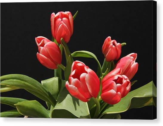 Red Tulips Canvas Print