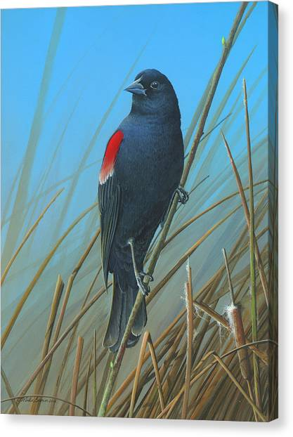 Red-winged Black Bird Canvas Print