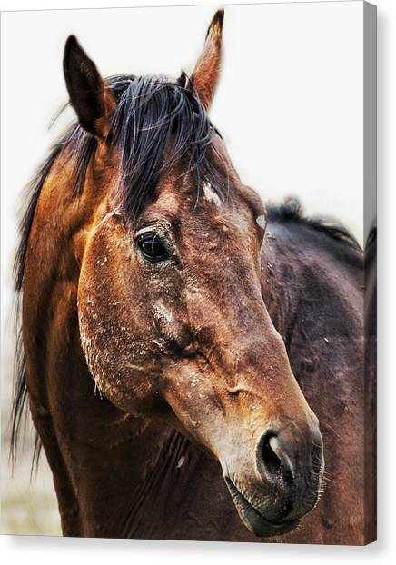 Canvas Print featuring the photograph Resilience by Belinda Greb