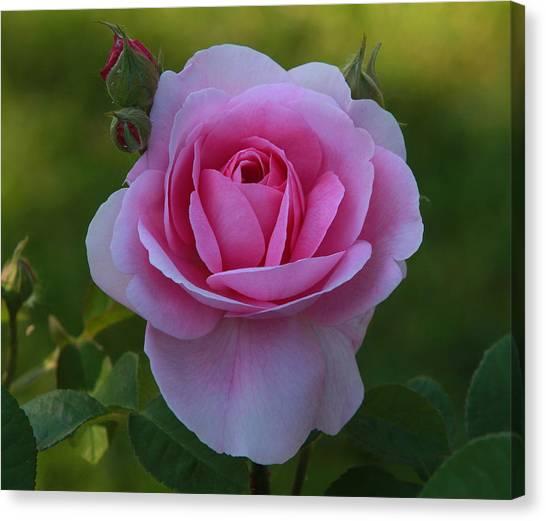 Rose Of Spring Canvas Print by Edward Kocienski
