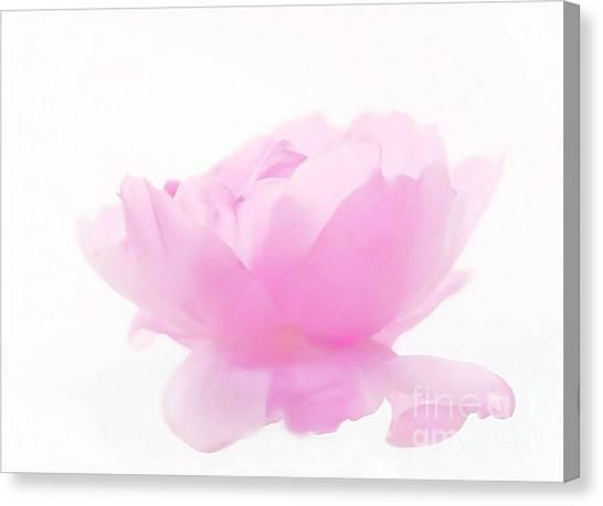 Rose Canvas Print by Sylvia  Niklasson