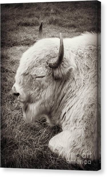Sacred Buffalo Canvas Print
