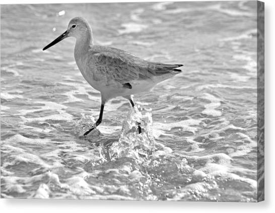 Sandpipers Canvas Print - Sandpiper by Betsy Knapp