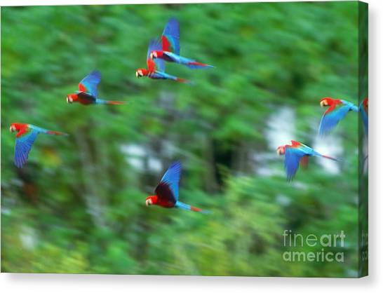 Amazon River Canvas Print - Scarlet And Green-winged Macaws by Art Wolfe