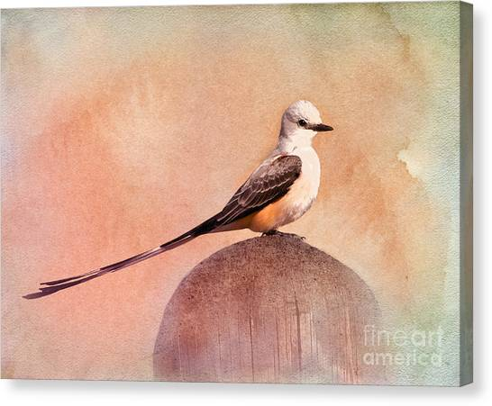 Flycatchers Canvas Print - Scissor-tailed Flycatcher by Betty LaRue