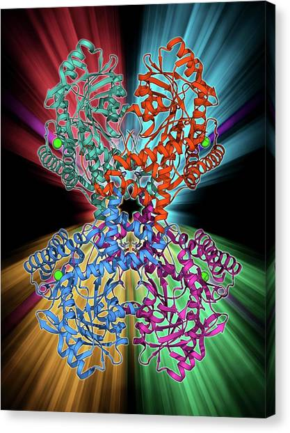 Sec Canvas Print - Selenocysteine Synthase Enzyme Molecule by Laguna Design