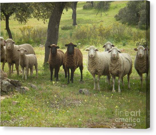 Sheep In Extremadura Canvas Print