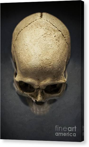 Skulls Canvas Print - Skull  by Edward Fielding