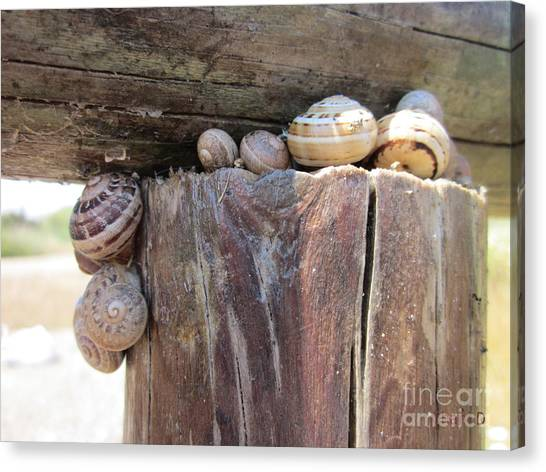 Snails Canvas Print
