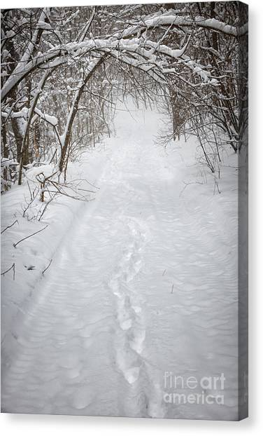 Overhang Canvas Print - Snowy Winter Path In Forest by Elena Elisseeva