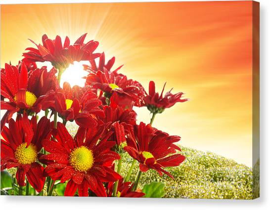 Vibrant Canvas Print - Spring Blossom by Carlos Caetano