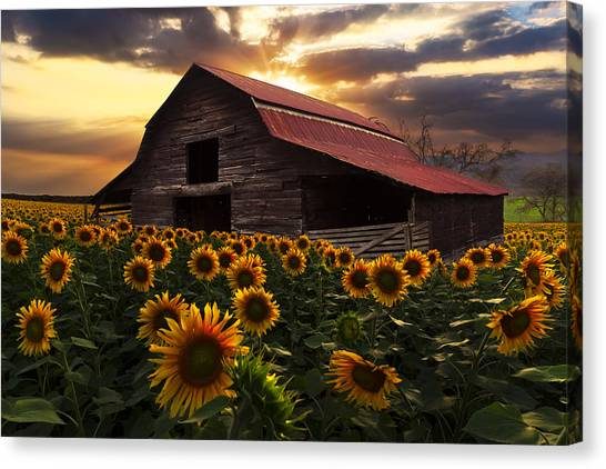 Barn Canvas Print - Sunflower Farm by Debra and Dave Vanderlaan
