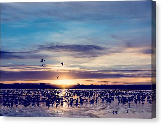 Geese Canvas Print - Sunrise - Snow Geese - Birds by SharaLee Art