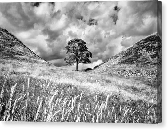 Sycamore gap canvas print sycamore gap hadrians wall by chris frost
