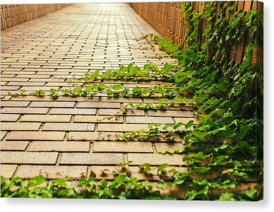 Pavers Canvas Print - Taking Over by Mountain Dreams