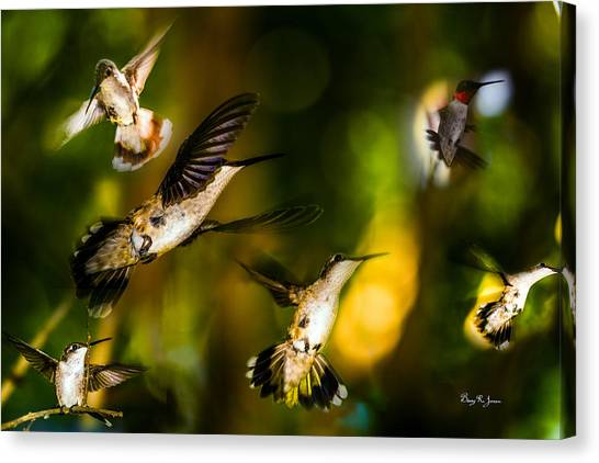 Hummingbirds - The Gathering Canvas Print