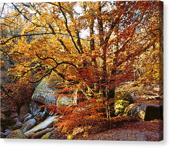 Fallen Leaf Canvas Print - Trees With Granite Rock At Huelgoat by Panoramic Images