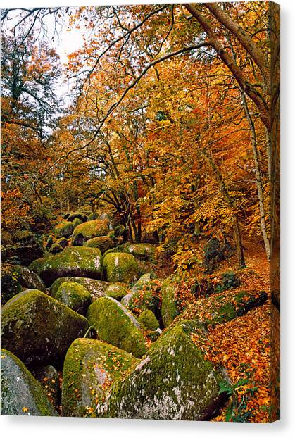 Fallen Leaf Canvas Print - Trees With Granite Rocks At Huelgoat by Panoramic Images