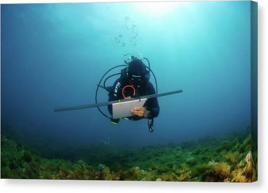 Underwater Survey Canvas Print by Photostock-israel