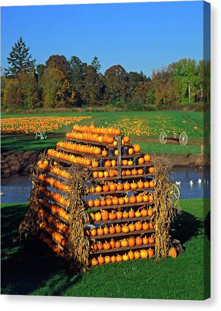 Pumpkin Patch Canvas Print - Usa, Oregon, Willamette Valley by Jaynes Gallery