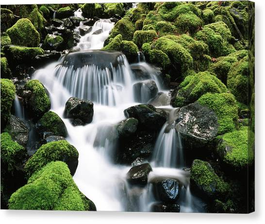 Olympic National Park Canvas Print - Usa, Washington State, Olympic National by Stuart Westmorland
