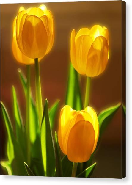 Vibrant Tulips Canvas Print
