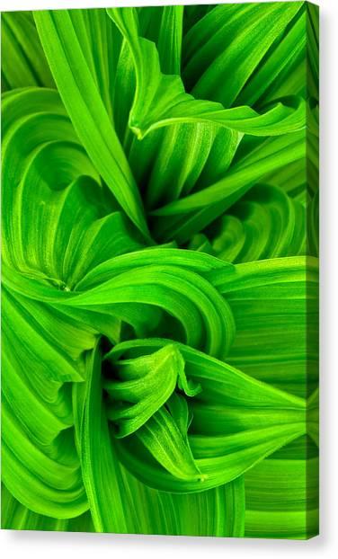 Wavy Green Canvas Print
