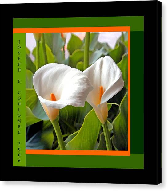 2 White Lily Flowers Canvas Print