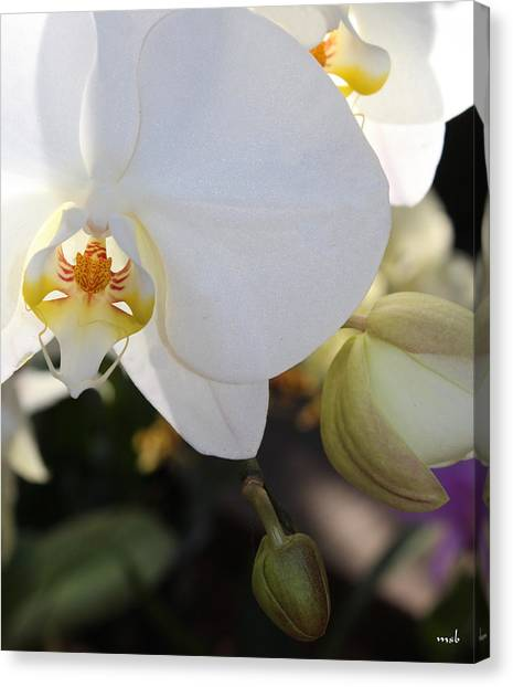White Orchid Three Canvas Print by Mark Steven Burhart