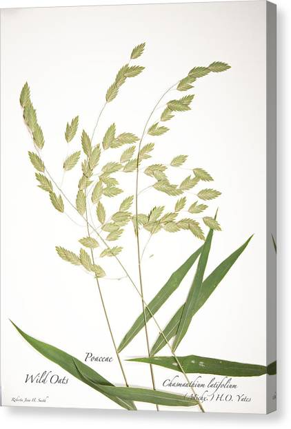Wild Oats Canvas Print