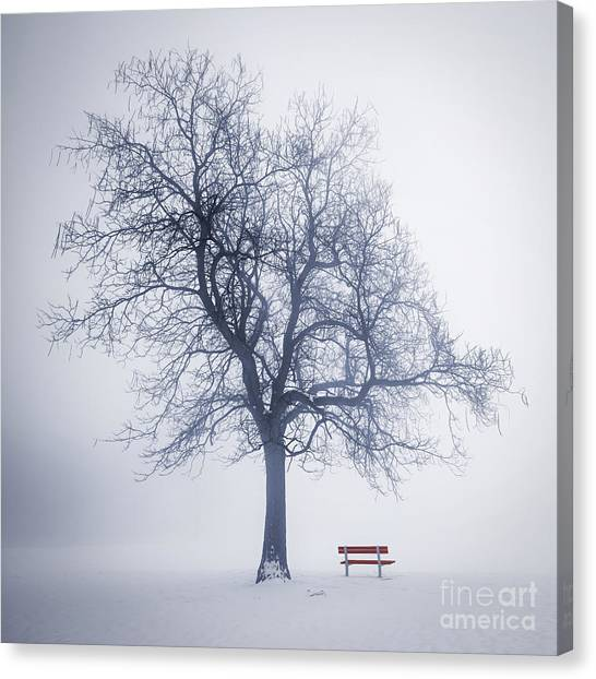 Stark Canvas Print - Winter Tree In Fog by Elena Elisseeva