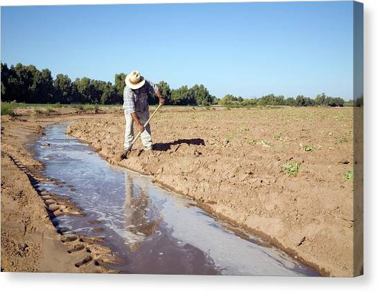 Ditch Canvas Print - Worker Digging Irrigation Channels by Jim West
